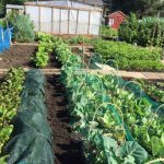 Grow Your Own Competition - Kilmarnock