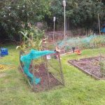 Grow Your Own Competition Entry