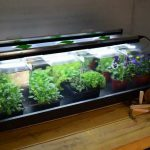 Geopod Propagators with Grow Lights Reviewed