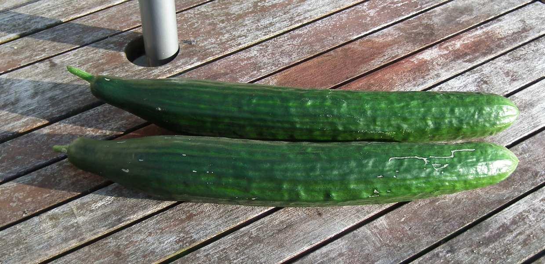 Bitter Cucumbers