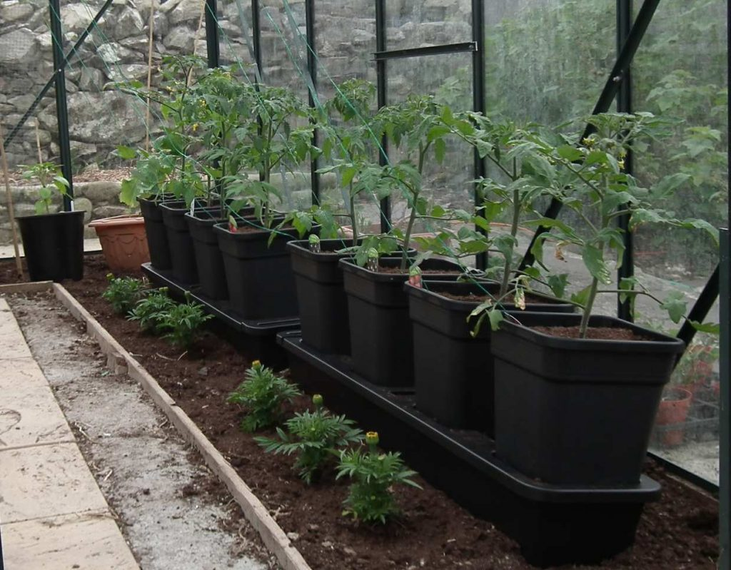 Quadgrow Tomato Greenhouse