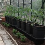 Quadgrow Tomato Growing System Reviewed - Double Your Crop!