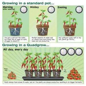 Quadgrow Planter - Watering Schedule