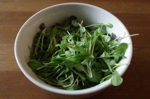 Bowl of Microgreens