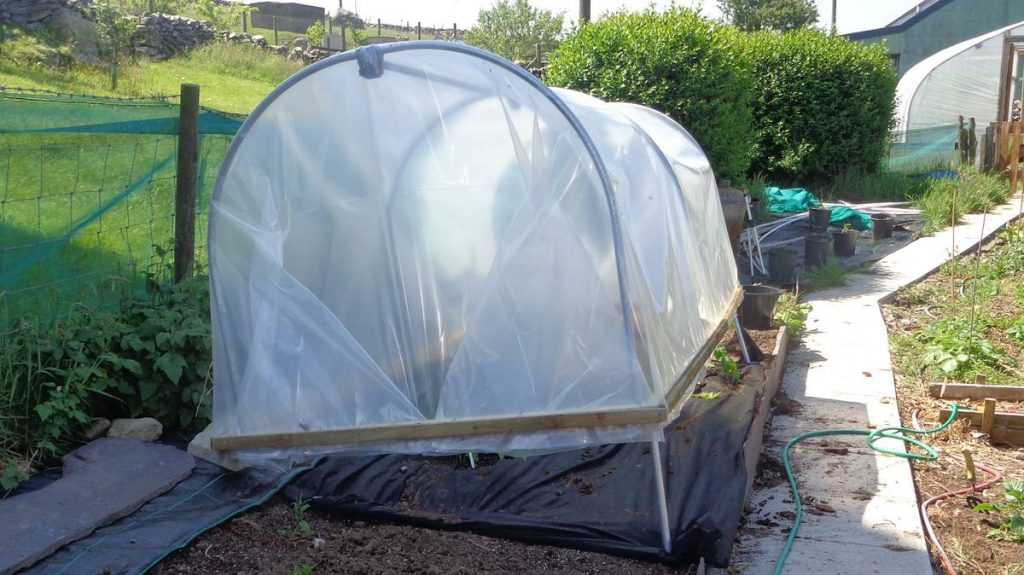 Mini Polytunnel in Use