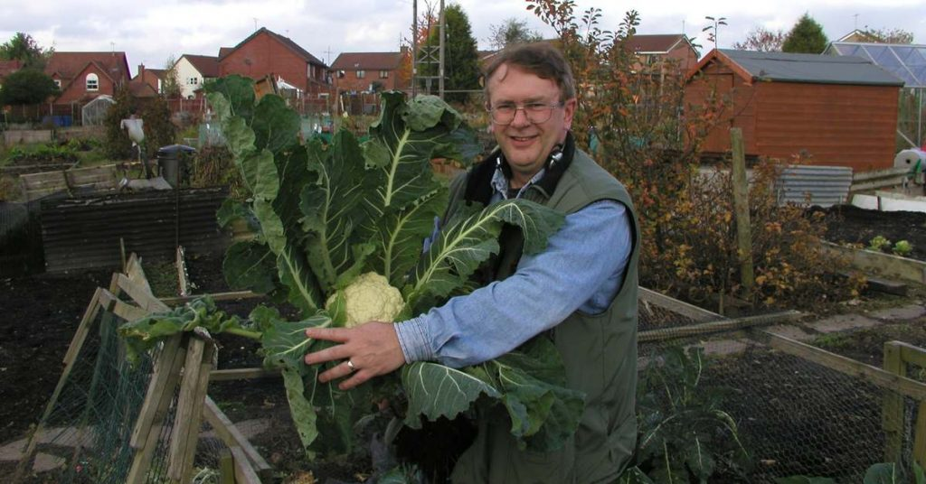 Allotment John with Cauliflower