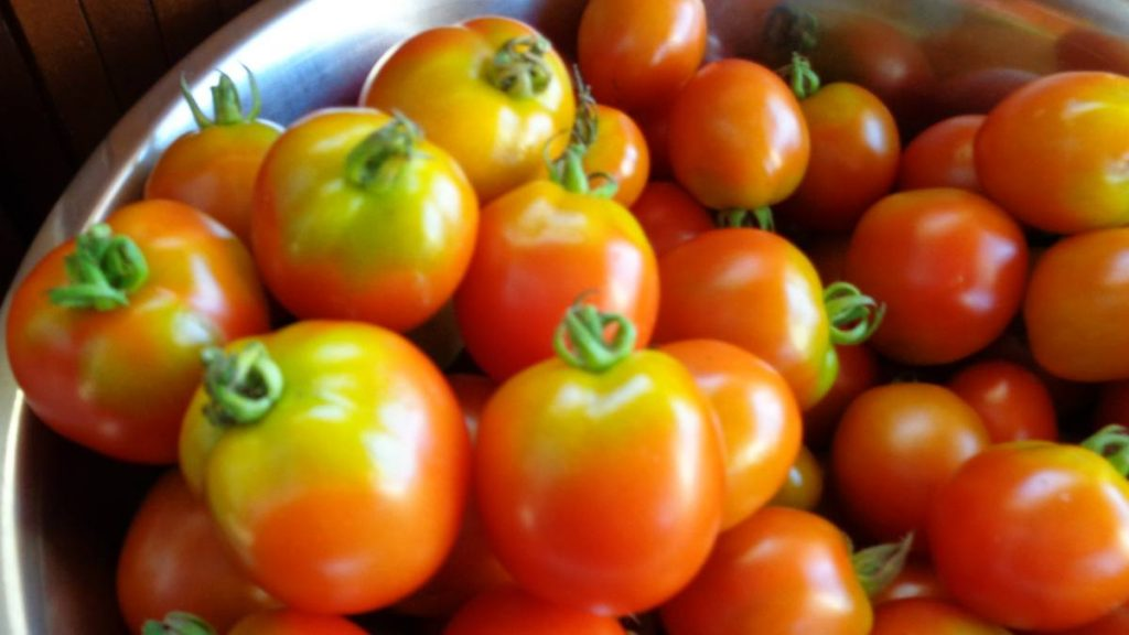 Greenback Tomatoes
