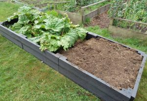 BRP Raised Bed Around Rhubarb